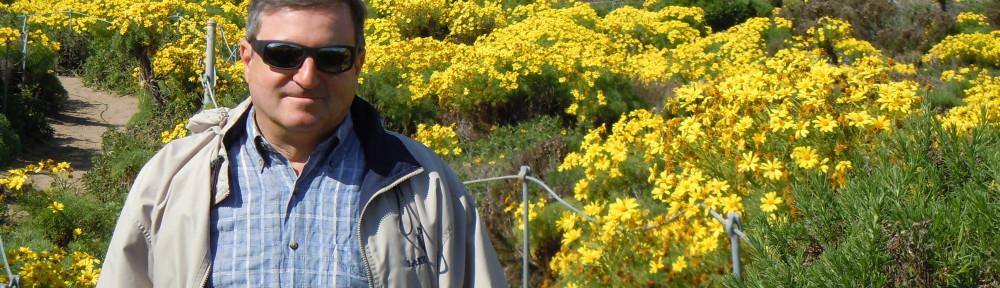 Sandro-yellow-flowers-4-1000×288