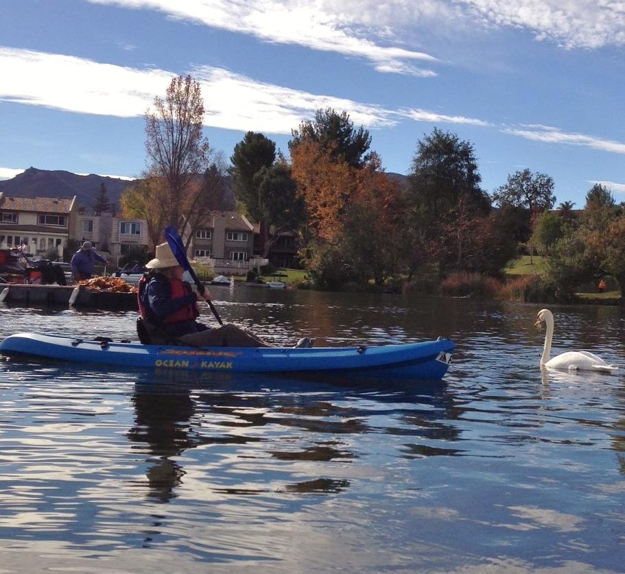 Kayaker-and-distressed-swan
