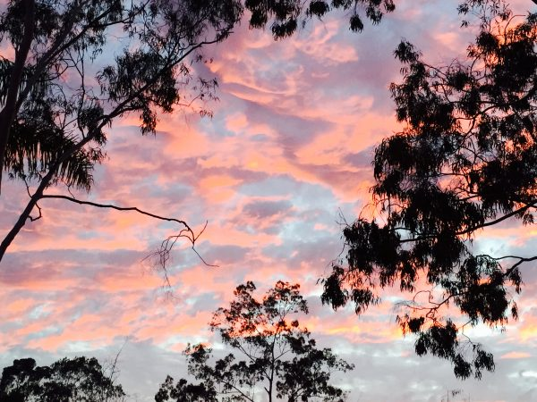 Sunset-and-Trees-600×450