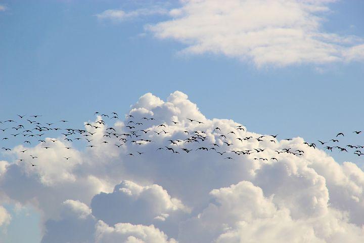 bird-migration-4023947__480